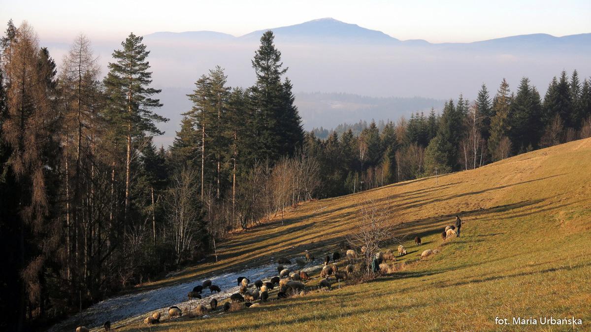 Babia Góra widziana spod Maciejowej