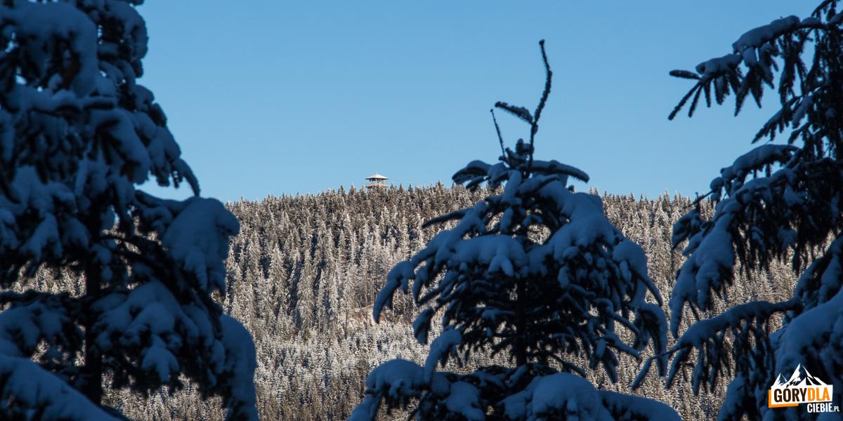 Wieża na Radziejowej widziana z drogi na Wielki Rogacz