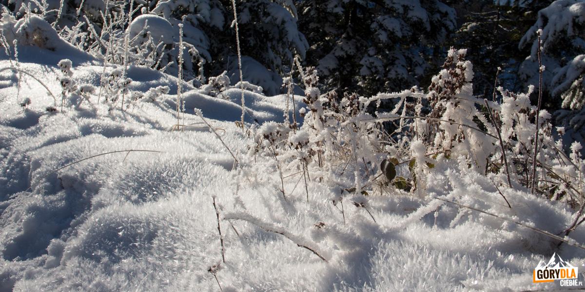 Zima pod Radziejową