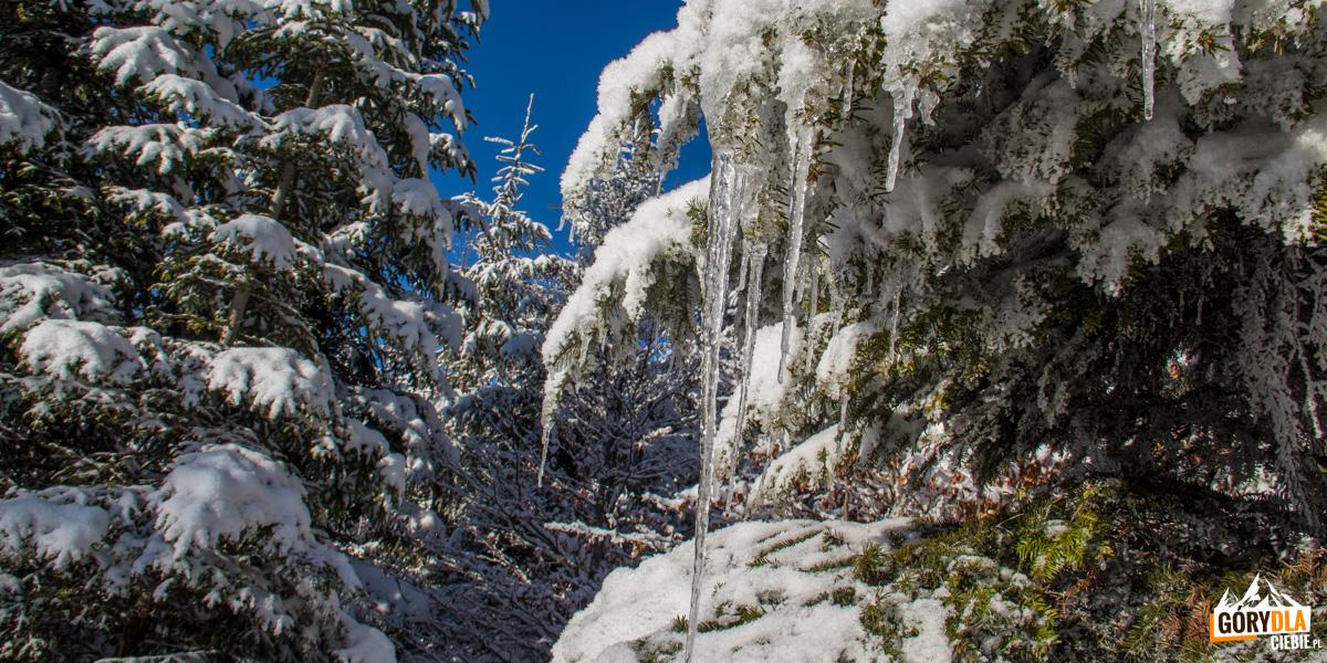 Zimowy sądecki las