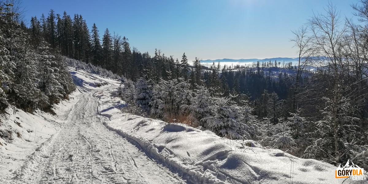Widoki z trasy narciarskiej pod szczytem Radziejowej