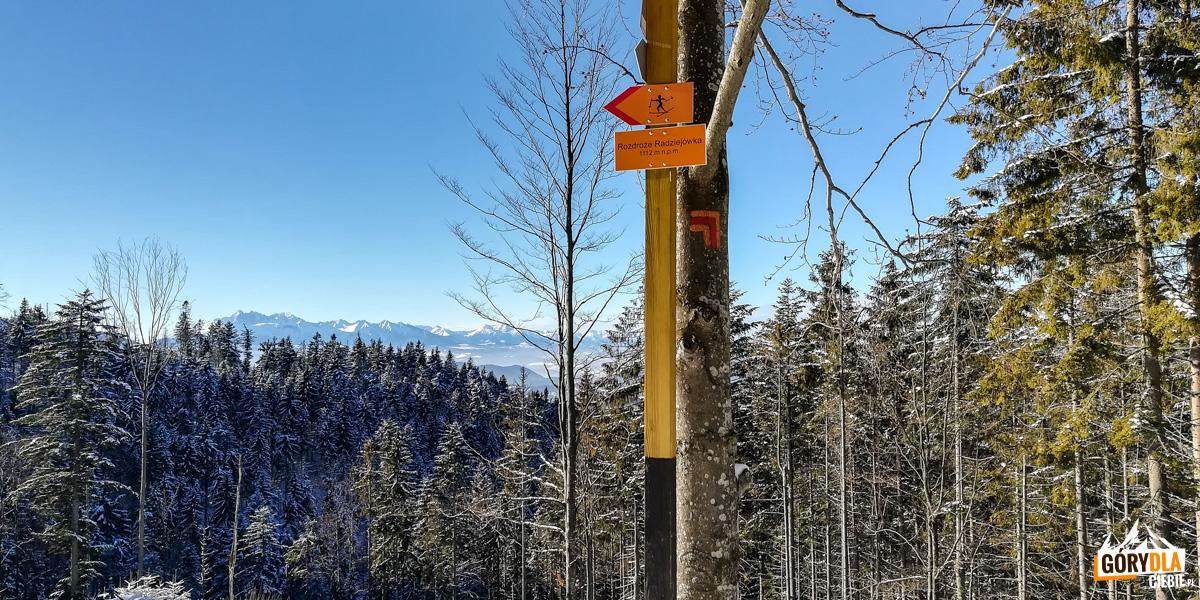 Rozdroże Radziejówka - na trasie narciarskiej pod szczytem Radziejowej