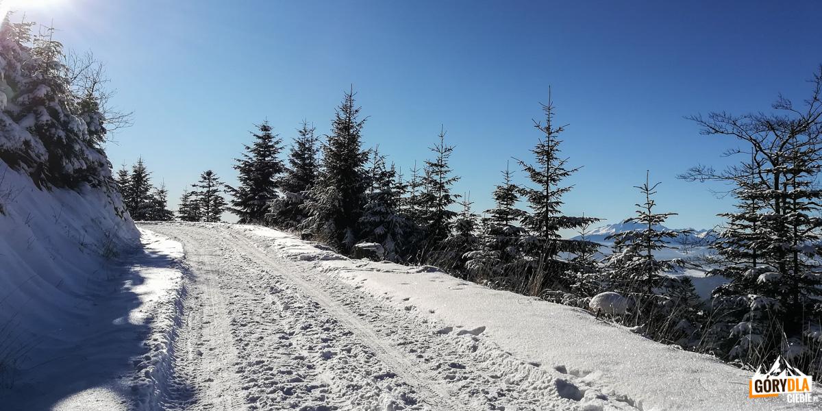 Trasa narciarska pod szczytem Radziejowej