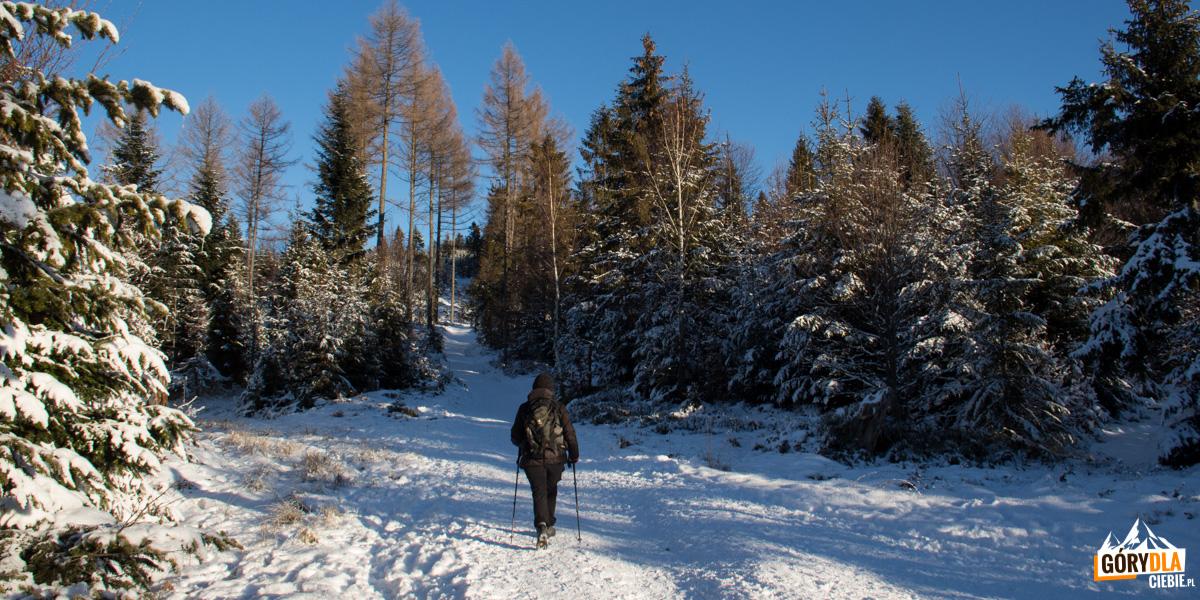 Podejście na Radziejową - szlak nad Przełęczą Obidza