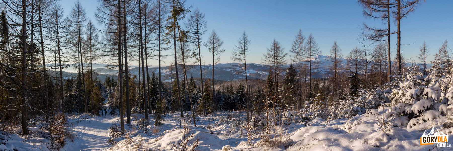 Widoki z drogi na Radziejową - nad Przełęczą Obidza