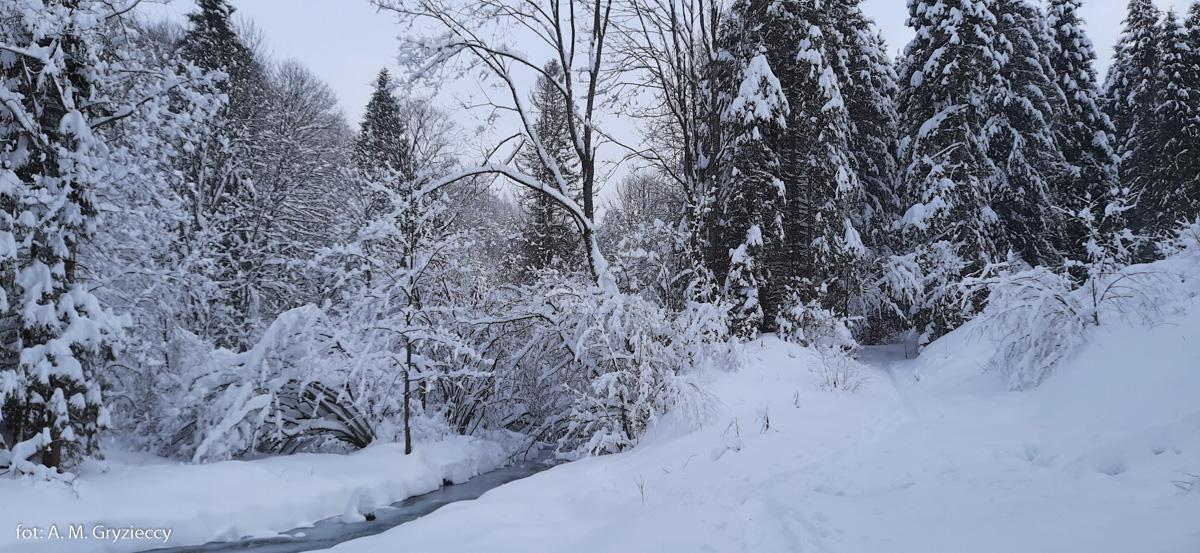 Zimowe Bereżki i droga na Przysłup Caryński