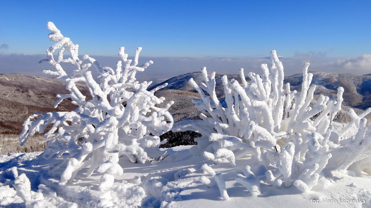Śnieżne fantazje przy szlaku na Malinowską Skałę