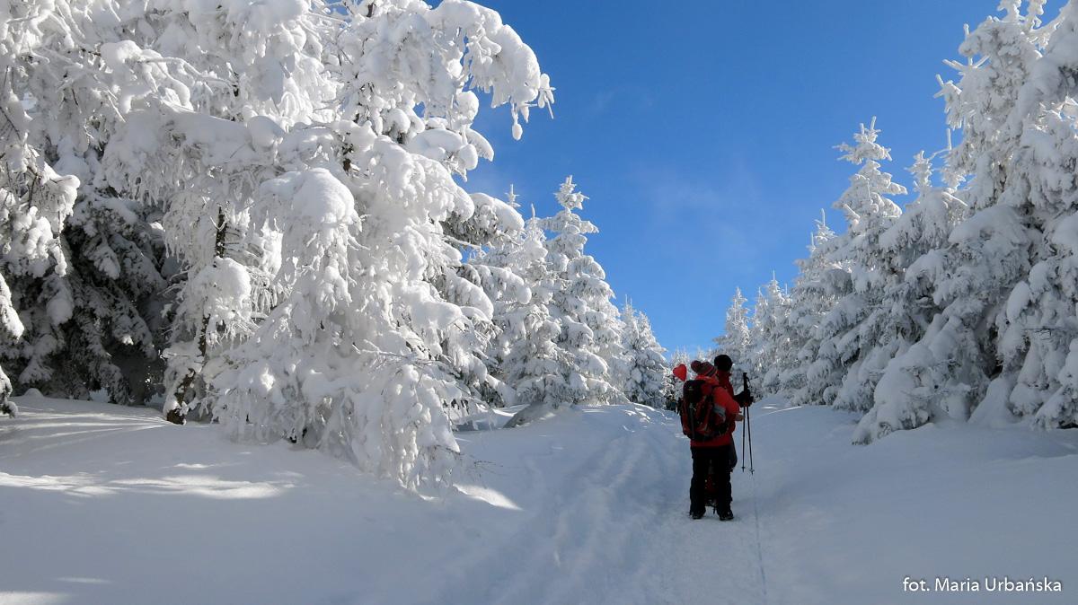 W drodze z Przełęczy Salmopolskiej na Malinów - jest pięknie!
