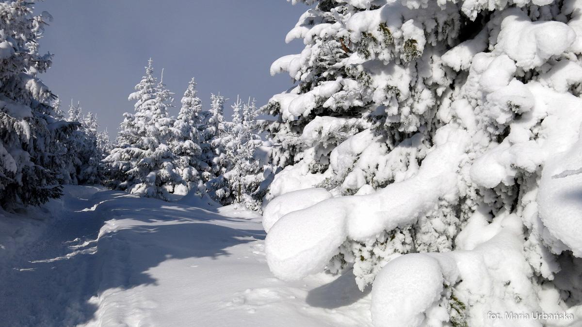Zimowe fantazje przy szlaku na Malinowską Skałę