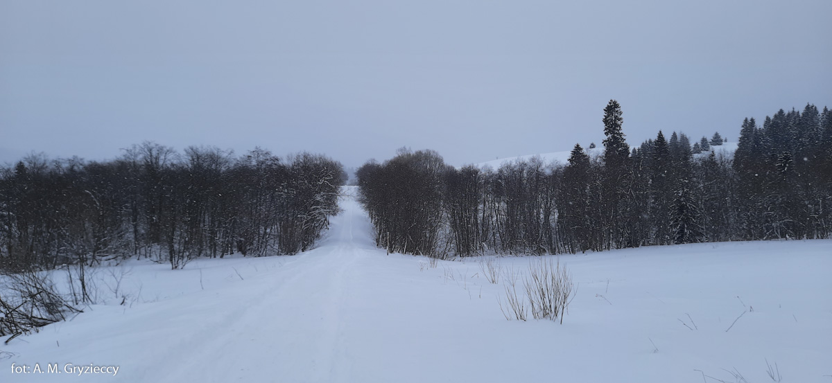 Droga do Bukowca