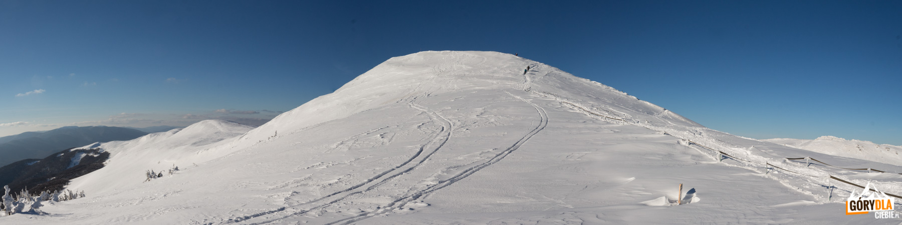 Tarniczka (1315 m) - bardzo widokowy szczyt, dalej niewidoczna stąd grań Szerokiego Wierchu