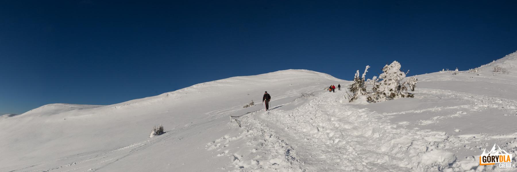 Droga na Przełęcz pod Tarnicą