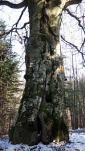 Ale drzewo ... ile tu można szlaków namalować