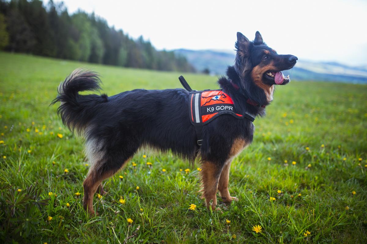 Pies ratowniczy ATENA, przewodnik Mariusz Liana