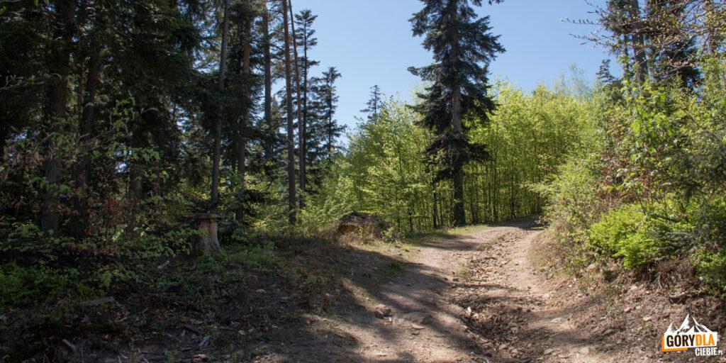 Zielony szlak ze Szczyrzyca na Ciecień