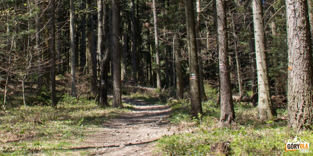 Do zielonego szlaku na Ciecień Wschodni dołącza czerwony, biegnący również ze Szczyrzyca