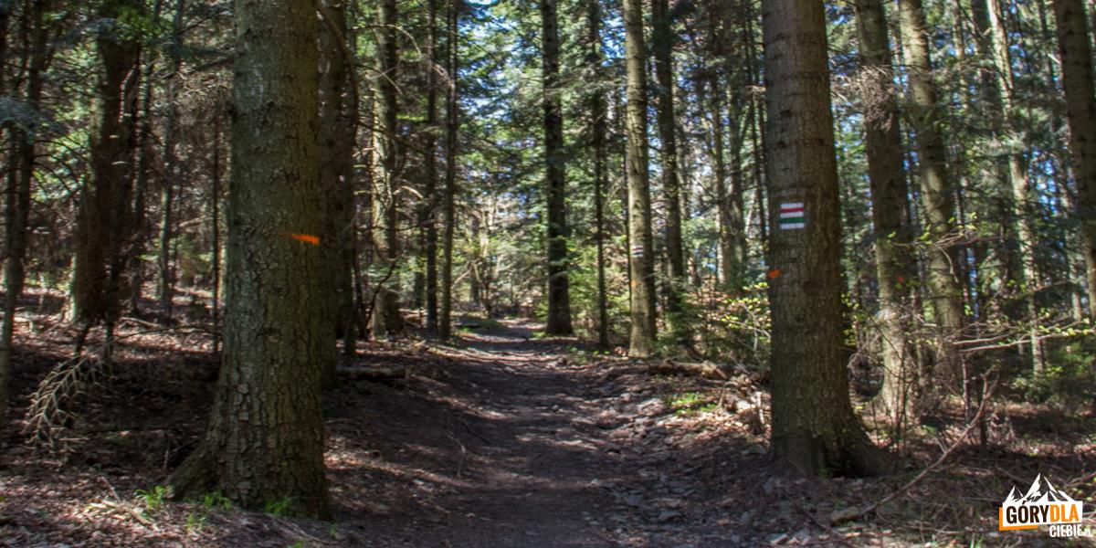 Podejście zielonym i czrwonym szlakiem na grań Cietnia