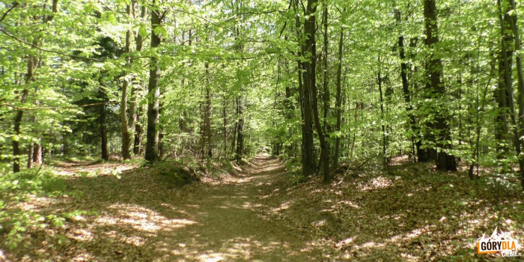 Przejście czerwonego szlaku przez mały zagajnik w Skrzydlnej
