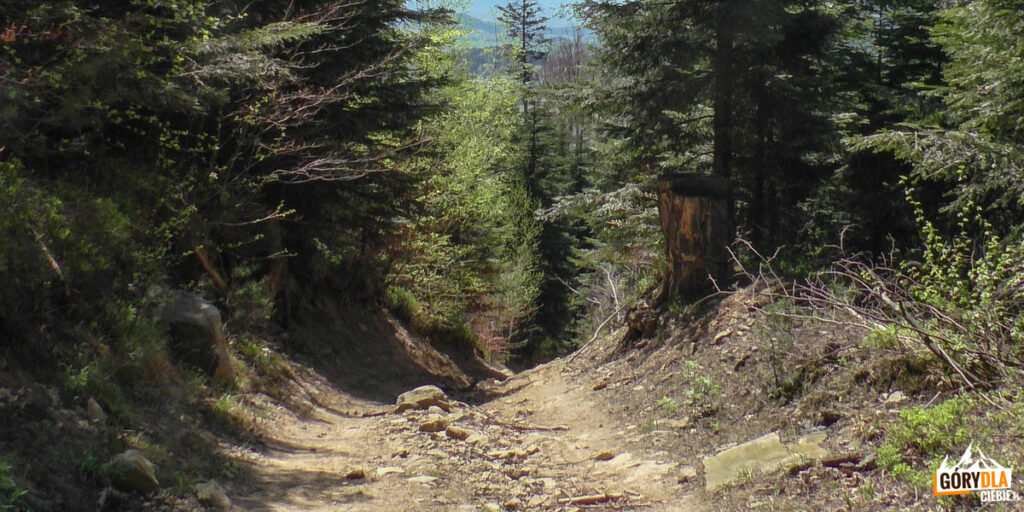 Czerwony szlak z Cietnia do Skrzydlnej