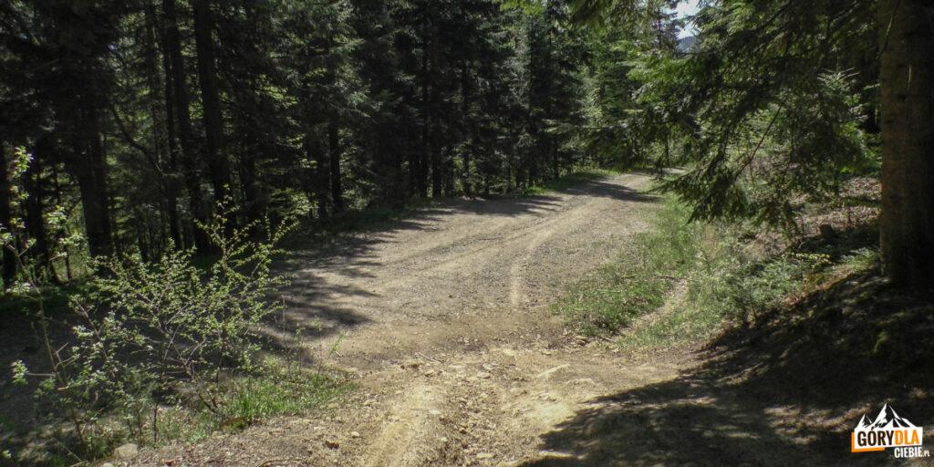 Czerwony szlak z Cietnia do Skrzydlnej - przejscie przez szutrową drogę