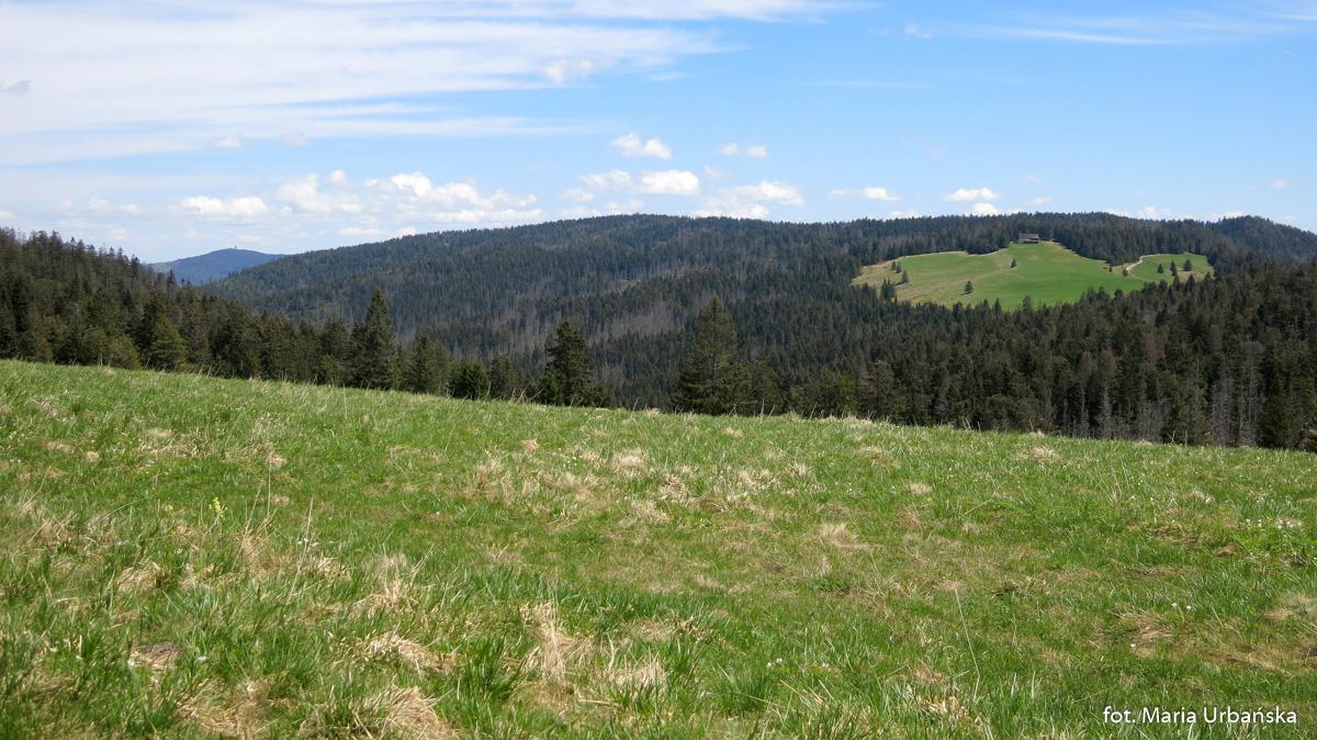 Widok z Hali Turbacz na Halę Długą, w tle Gorc