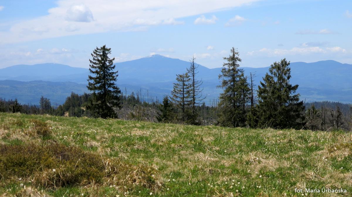 Babia Góra widziana z Hali Turbacz