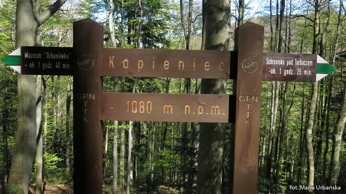 Kopieniec na trasie zejścia zielonym szlakiem do Koninek
