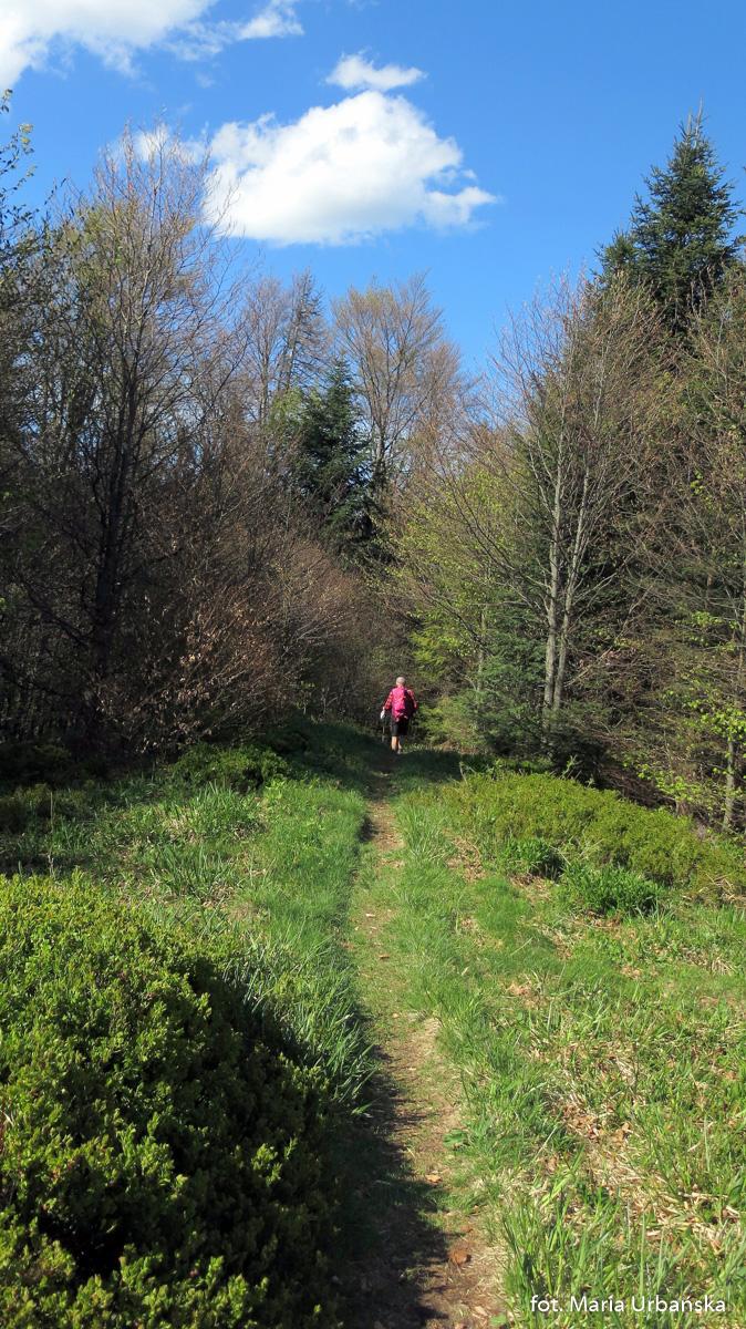Malownicza trasa zejścia zielonym szlakiem do Koninek