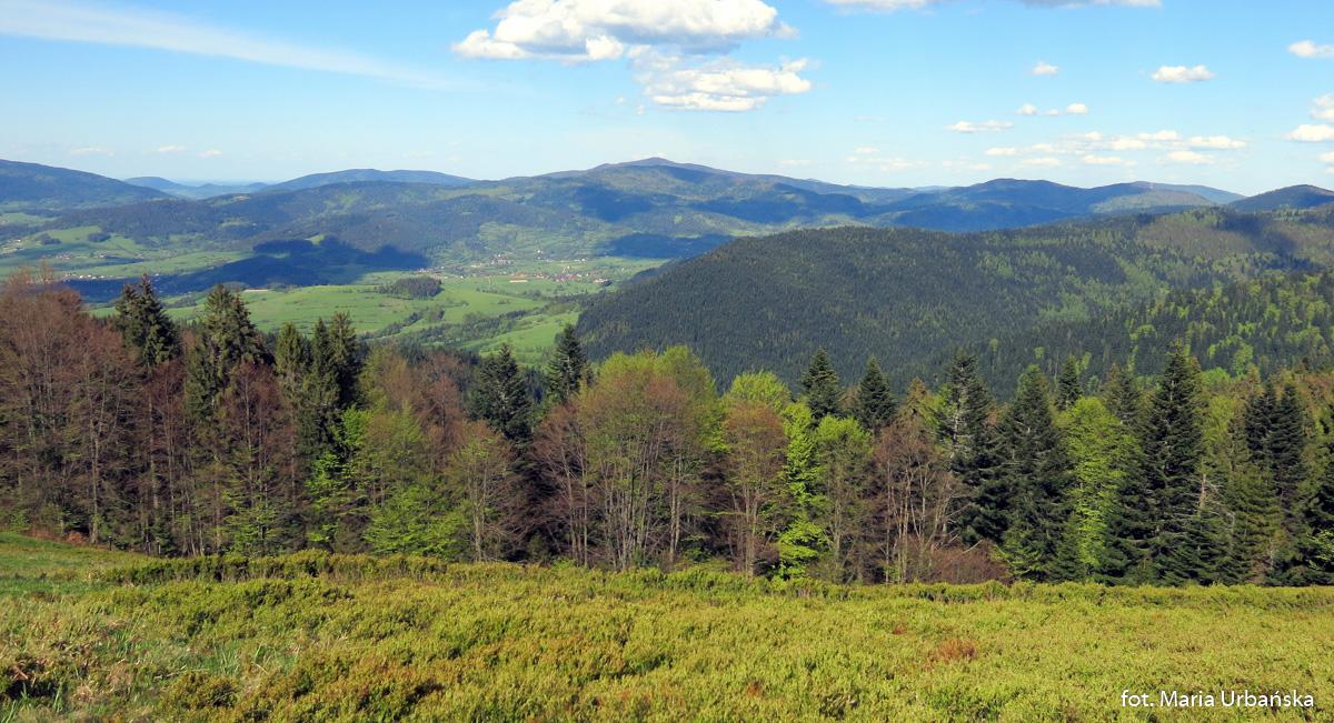 Panorama Beskidu Wyspowego z Polany Turbaczyk