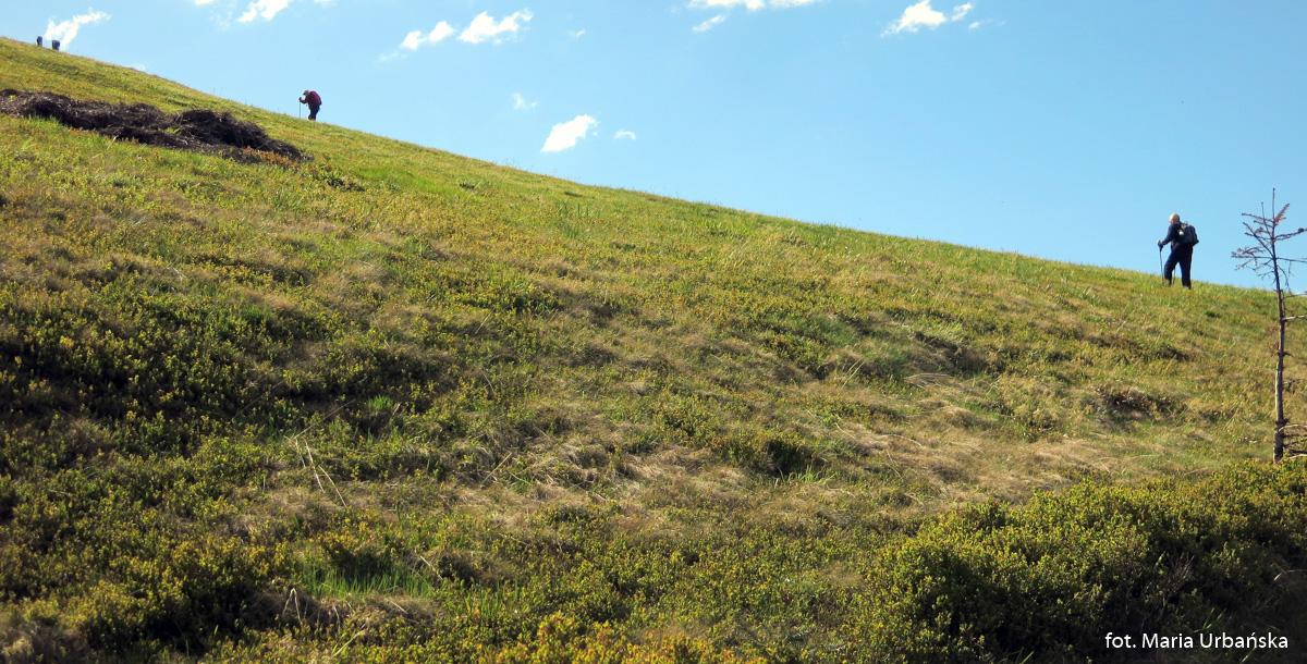 Podejście na szczyt Turbaczyka