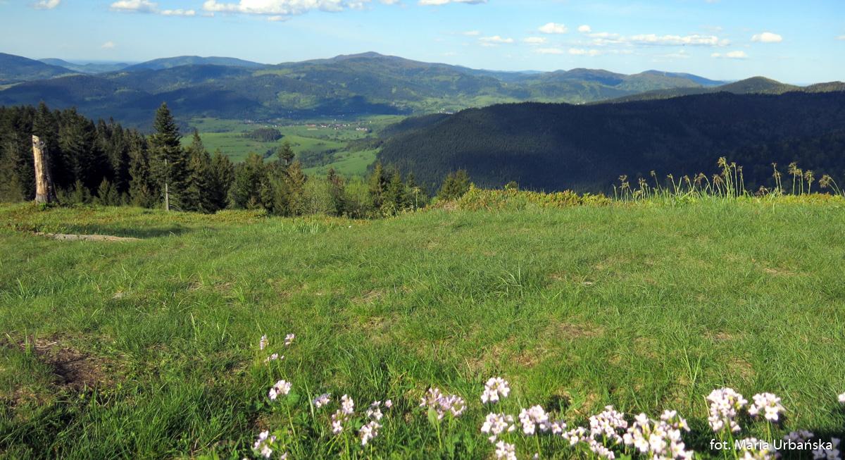 Panorama Beskidu Wyspowego ze szczytu Turbaczyka