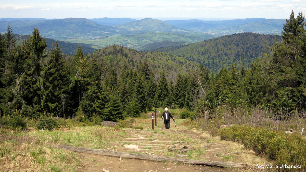 Podejście niebieskim szlakiem na Czoło Turbacza
