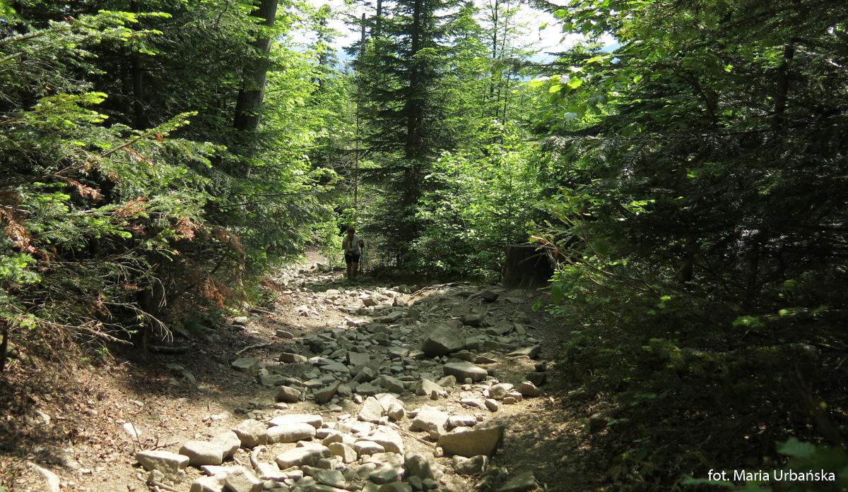 Podejście na Mogielicę od Przełęczy Rydza Śmigłego