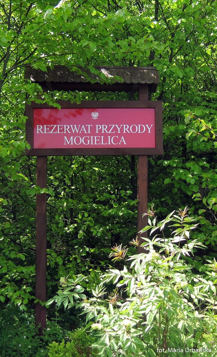 Mogielica i polana Stumorgowa
